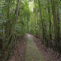 Sarapiqui Rainforest